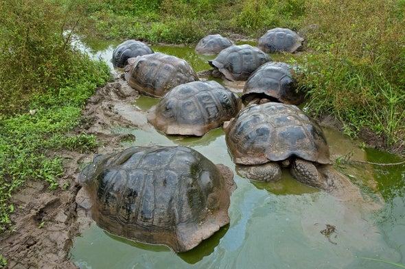<em>Moby-Dick</em> and the Galápagos Tortoises