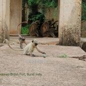 BUNDI, INDIA: