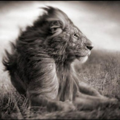 Awaiting Animals: Casting East African Wildlife