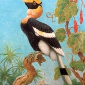 GREAT INDIAN HORNBILL, one of many bird species Knight depicted
