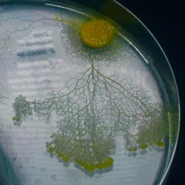 How Brainless Slime Molds Redefine Intelligence [Video]