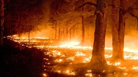 Chasing the Flame: Does Media Coverage of Wildfires Probe Deeply Enough?