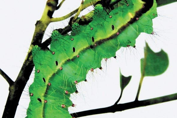 Wild Silkworms Produce Proteins Primed for Bioprinting