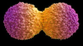 """""""Ghost"""" Cytometry May Improve Cancer Detection, Enable New Experiments"""