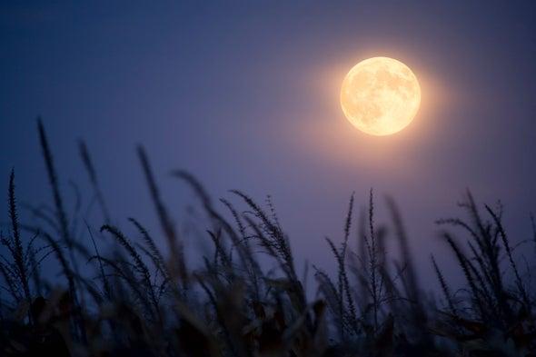 Mammals Moonlight around Human Settlements