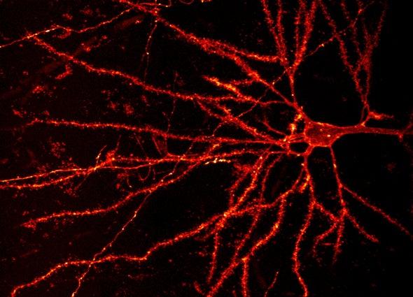 Neuroscience - Magazine cover