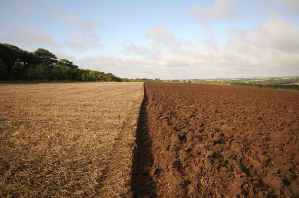 Soils Store Huge Amounts of Carbon, Warming May Unleash It