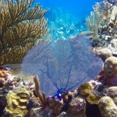 Healthy Cuban reefs