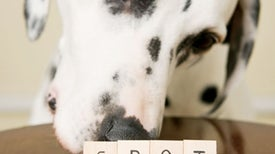 A Dog Expert Talks about the Canine Mind