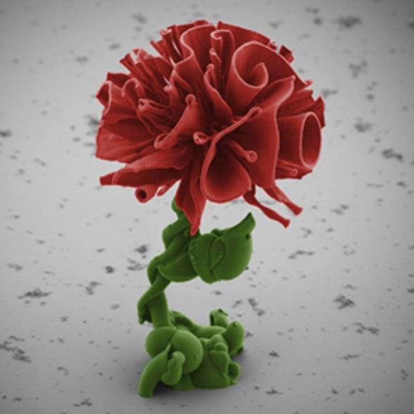 Very Fine Art: 6 Stunningly Beautiful Nanoscale Sculptures [Slide Show]