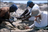 "New Fossils Illustrate ""Bushiness"" of Human Evolution"