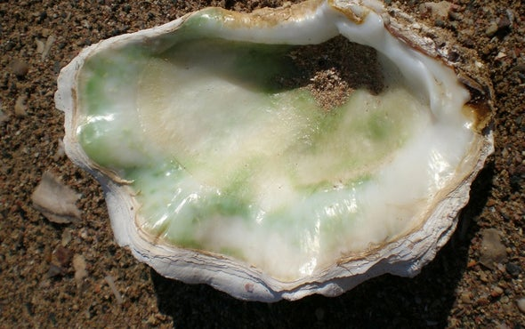 Mother-of-Pearl Holds the Key to Historical Ocean Temperatures