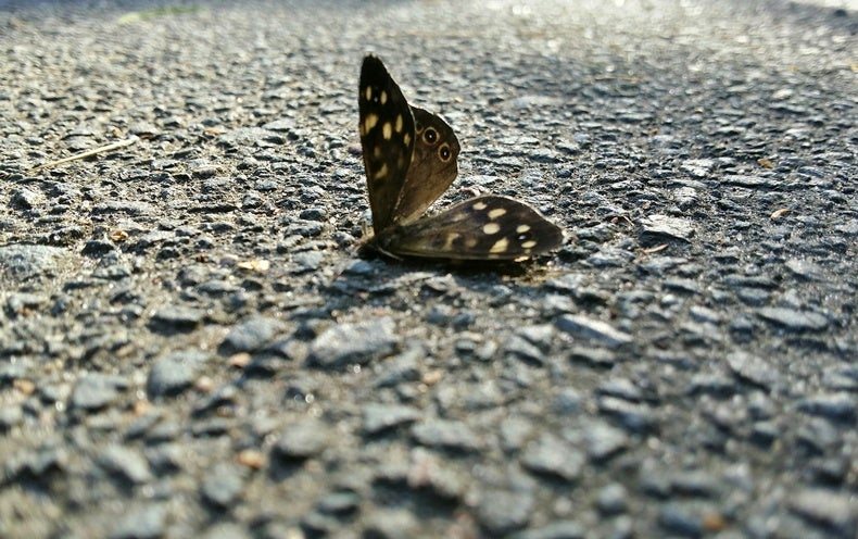"""Insect """"Armageddon"""": 5 Crucial Questions Answered"""