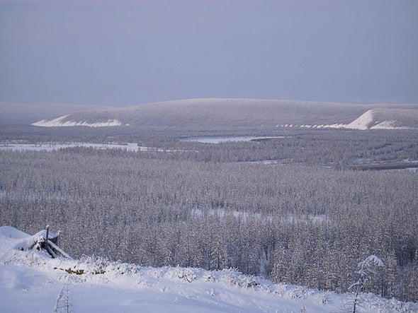 Northern Forests Falter in Combating Climate Change