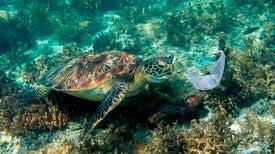 Ocean Plastic Smells Great to Sea Turtles
