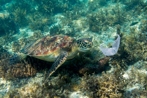 Ocean Plastic Smells Great to Sea Turtles