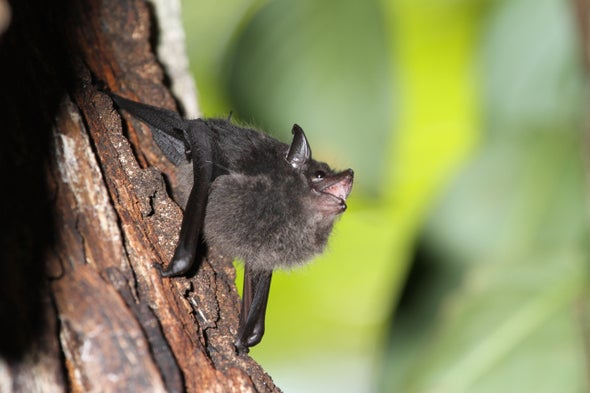 These Baby Bats, like Us, Were Born to Babble