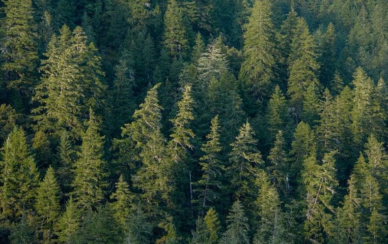 Rising Temperatures Stunt Tree Growth