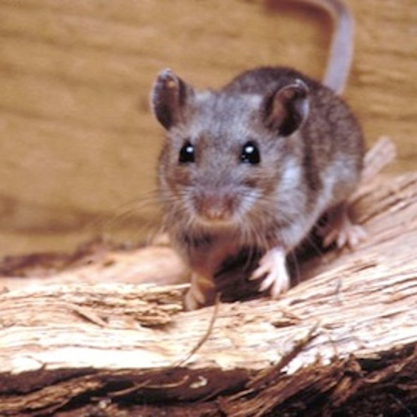What Caused the Yosemite Hantavirus Outbreak?
