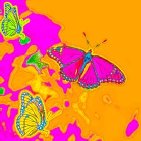 psychedelics, mind, brain acitivity