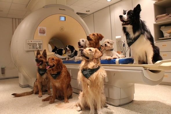 Dogs May Understand Even More Than We Thought