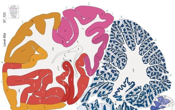 Human Brain Map Gets a Bold New Update