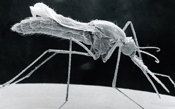 New Weapons in Humanity's War on Mosquitoes