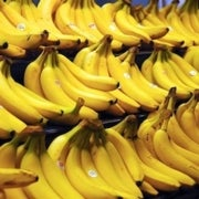 Banana Fungus Creeps Closer to World's Key Plantations