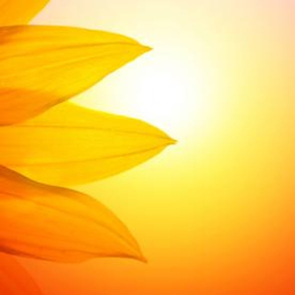Plants versus Photovoltaics: Which Are Better to Capture Solar Energy?