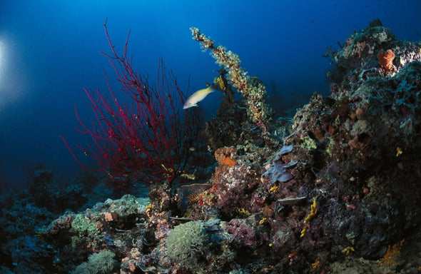 Our Noise Bothers Overlooked Seafloor Critters