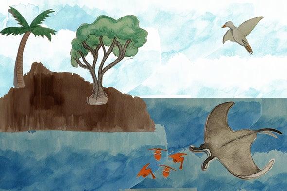 Seabird Revealed in a Marine Food Web