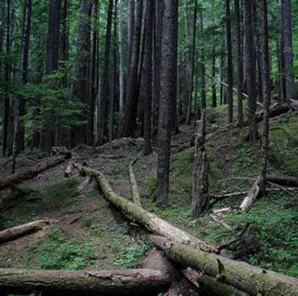 Out on a Limb: Global Warming May Be Killing Old-Growth Forests
