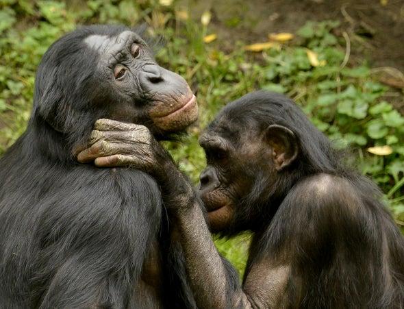 What Chimpanzees Can Teach Us about Human Friendships