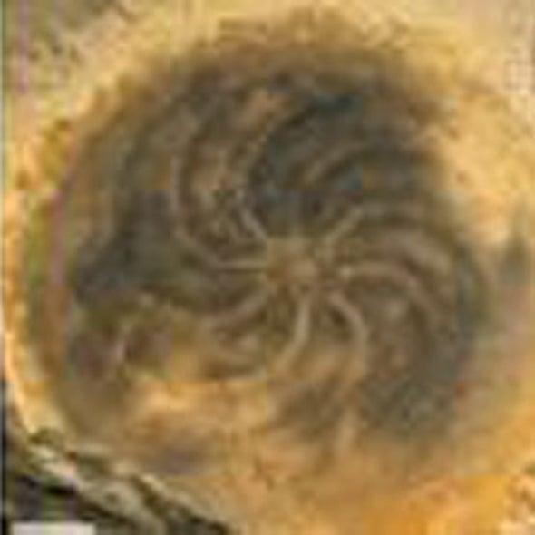 Ancient Sea Jelly Shakes Evolutionary Tree of Animals