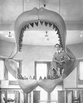 Museum Menagerie: Historical Photos of the Construction of Early Wildlife Exhibits [Slide Show]