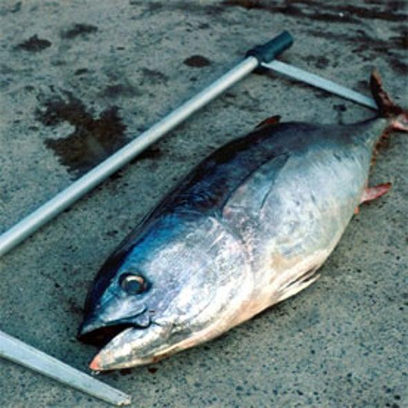 """""""Tag A Tiny"""" Tuna Fishing Program"""