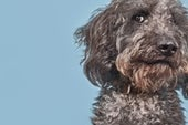 Your Dog May Not Be a Genius, after All