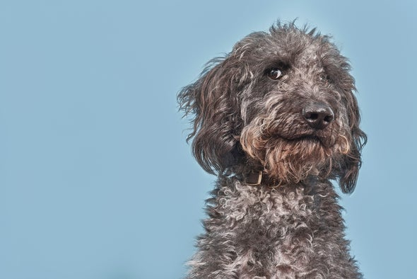Your Dog May Not Be a Genius, after All - Scientific American