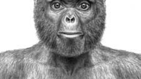 Long-Awaited Research on a 4.4-Million-Year-Old Hominid Sheds New Light on Last Common Ancestor