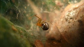 How Hurricanes Influence Spider Aggressiveness