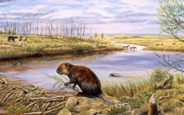 Invading Beavers Turn Tundra to Ponds