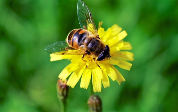 Bees Prefer Flowers That Proffer Nicotine