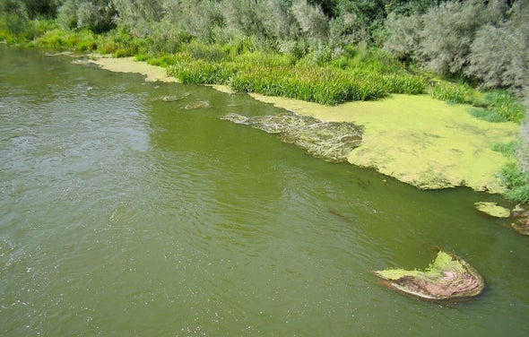 Trying to Tame the Klamath River Filled It with Toxic Algae