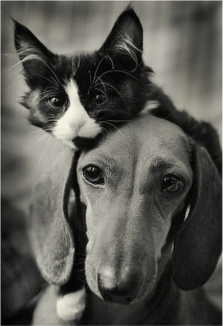 Love Pets? Tell Us More