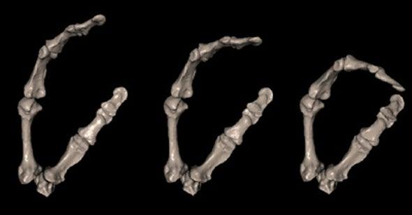 Nimble-Fingered Neandertals