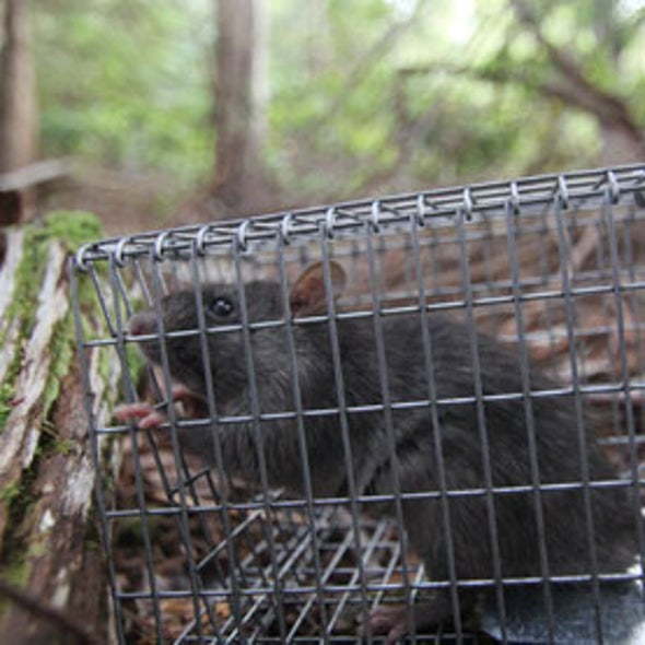 Canada Declares War on Rats