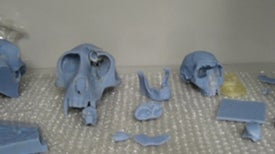 3-D Printing Gets Ahead: Anthropologists Use Printing Technology to Model Fossils