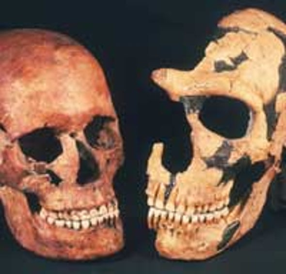 Neandertals Not among Our Ancestors, Study Suggests