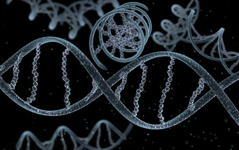 Gene-Editing Research in Human Embryos Gains Momentum