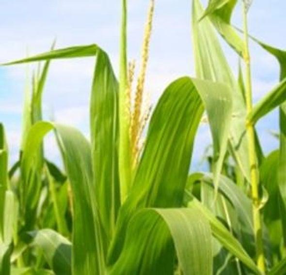 Impacts of Global Biofuel Boom Remain Murky